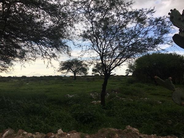 Terreno en Venta en Tequisquiapan en Querétaro en colonia El Sauz