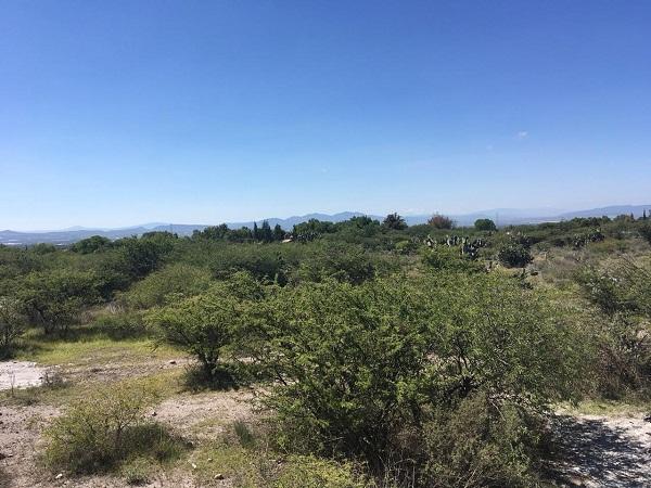 Hectáreas en Venta en Bernal en Municipio de Ezequiel Montes, Querétaro Tx-2355 (1)