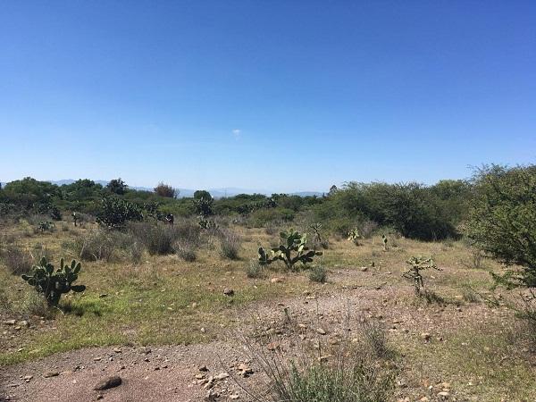 Hectáreas en Venta en Bernal en Municipio de Ezequiel Montes, Querétaro Tx-2355 (2)