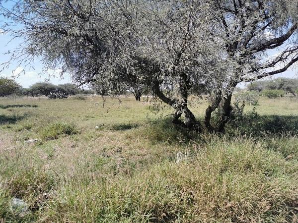 Venta de Terreno en Tequisquiapan, Querétaro en Colonia Charretera Tx-2366 (1)