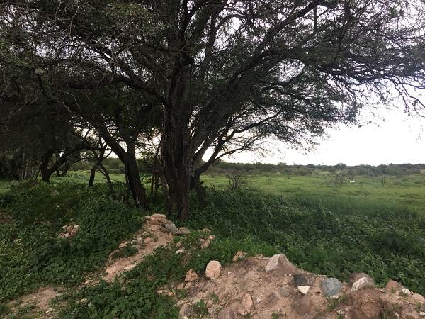 Terreno en Venta en Tequisquiapan en Querétaro en colonia El Sauz Tx-2269