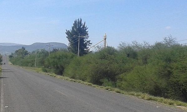 Hectáreas en Venta en carretera Bernal a Toliman Tx-2335